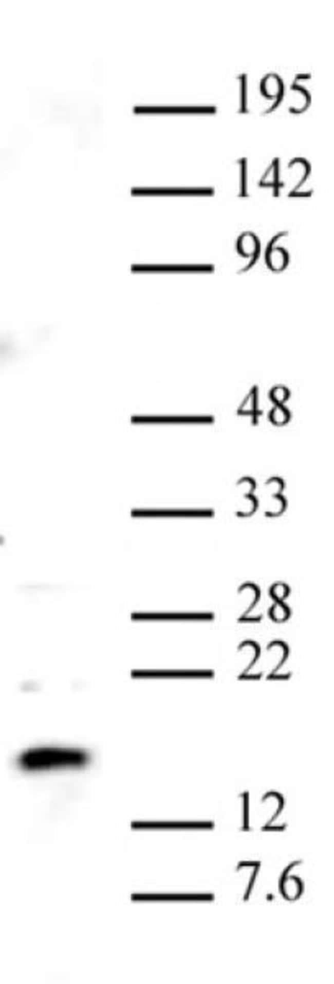 Pht1 / Histone H2A.Z Rabbit anti-Yeast, Unconjugated, Polyclonal, Active