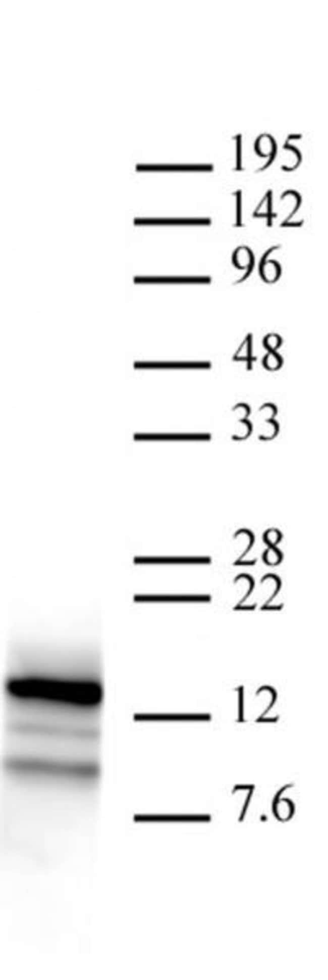 Htz1 / Histone H2A.Z Rabbit anti-Yeast, Unconjugated, Polyclonal, Active