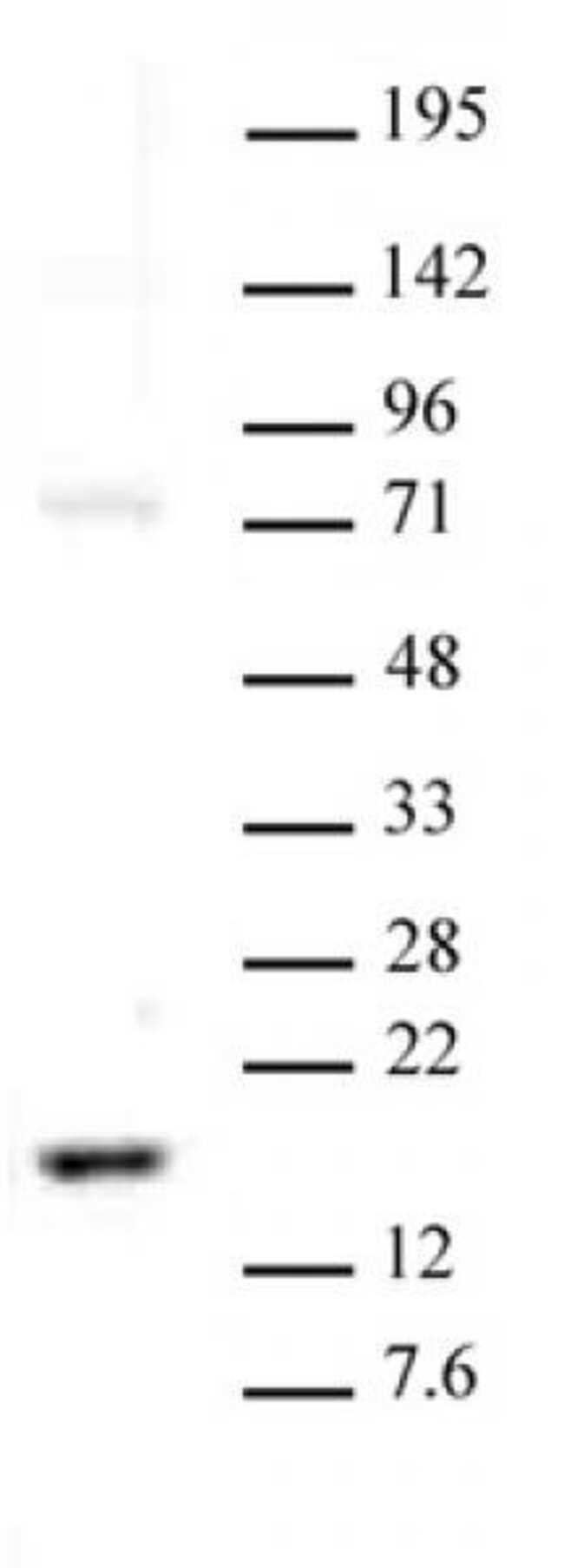 Histone H3K23me2 Rabbit anti-Human, Unconjugated, Polyclonal, Active Motif:Antibodies:Primary