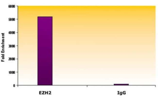 EZH2 Mouse anti-Human, Mouse, Clone: AC22, Active Motif:Antibodies:Primary