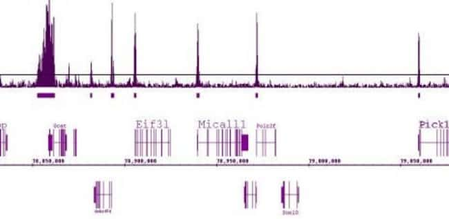 Histone H3K9ac Rabbit anti-Human, Mouse, Unconjugated, Polyclonal, Active
