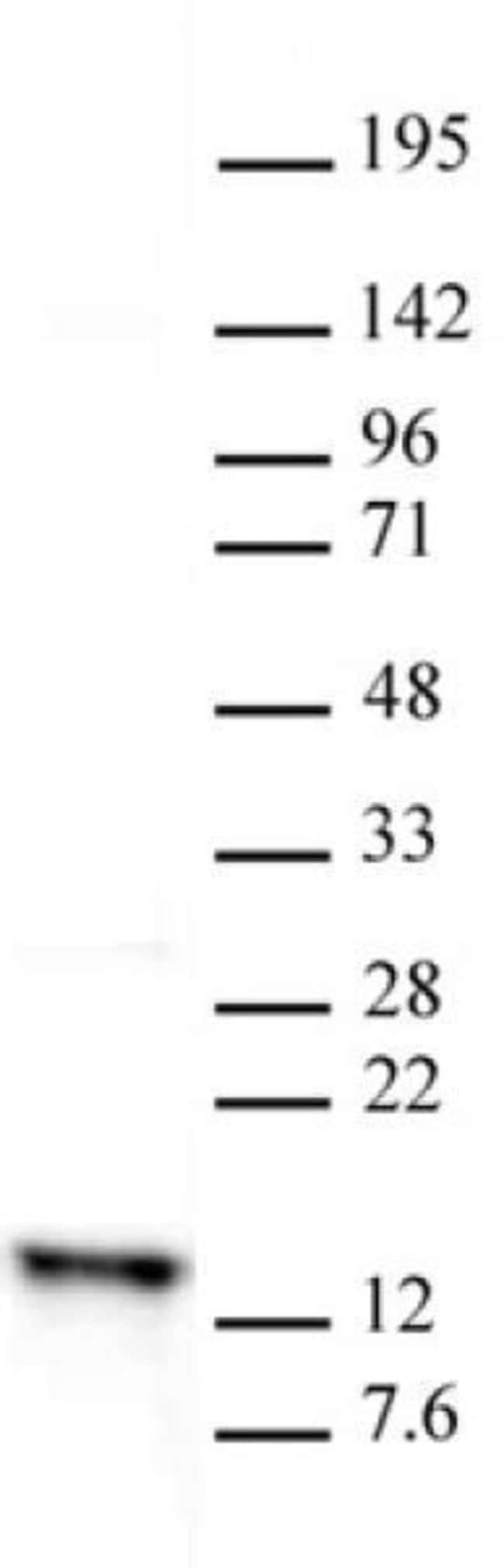 Histone H2A Rabbit anti-Yeast, Unconjugated, Polyclonal, Active Motif:Antibodies:Primary