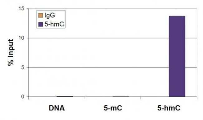 5-Hydroxymethylcytosine (5-hmC) Mouse anti-Human, Mouse, Clone: 59.1, Active