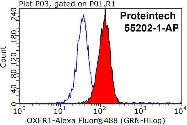 OXER1 Rabbit anti-Human, Polyclonal, Proteintech 150 μL; Unconjugated Ver productos