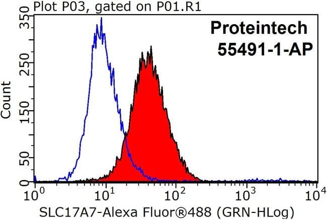 VGLUT1 Rabbit anti-Human, Polyclonal, Proteintech 20 μL; Unconjugated Ver productos