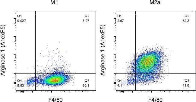 Arginase 1 Rat anti-Human, Mouse, PE, Clone: A1exF5, eBioscience™ 25 μg; PE Ver productos