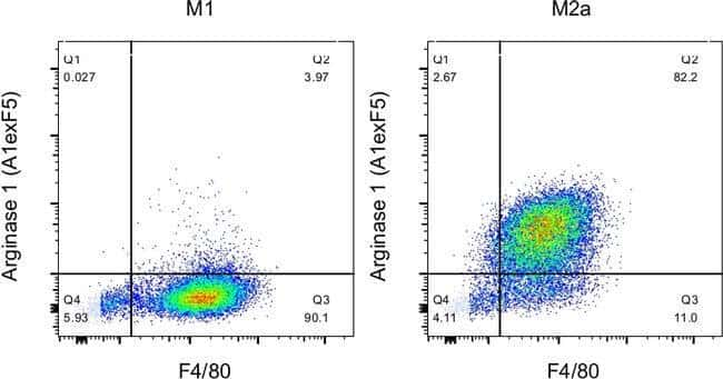 Arginase 1 Rat anti-Human, Mouse, PE-Cyanine7, Clone: A1exF5, eBioscience™ 100 μg; PE-Cyanine7 Products