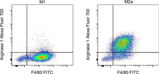 Anticorps anti-arginase 1 de rat, anti-humain, souris, Alexa Fluor® 700, Clone: A1exF5, eBioscience™ 25μg; AlexaFluor® 700 voir les résultats