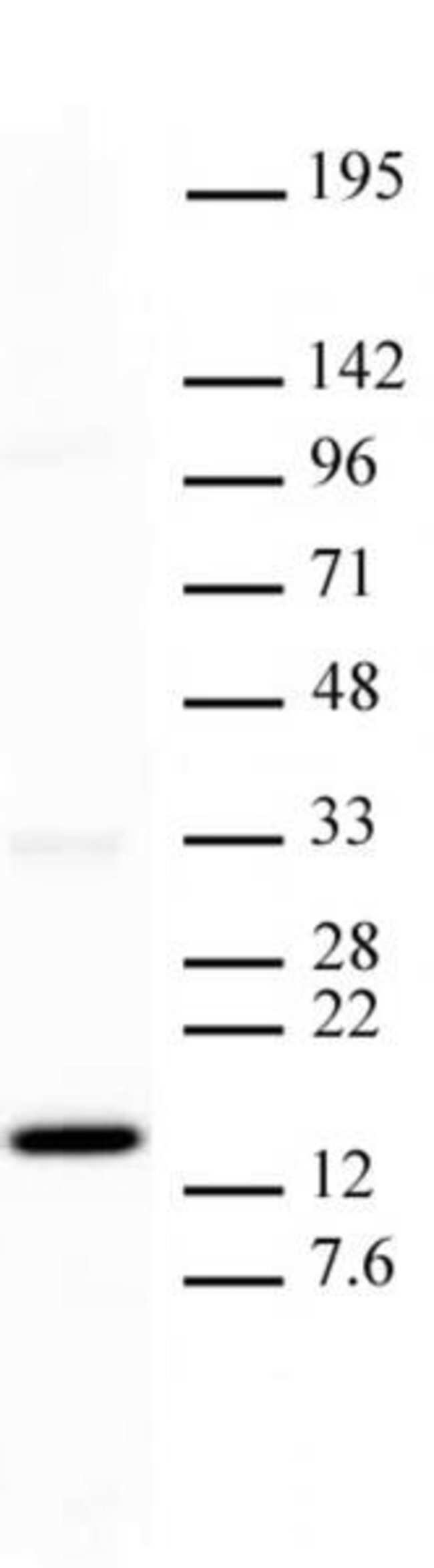Histone H3K27me1 Mouse anti-Human, Clone: MABI 0321, Active Motif:Antibodies:Primary