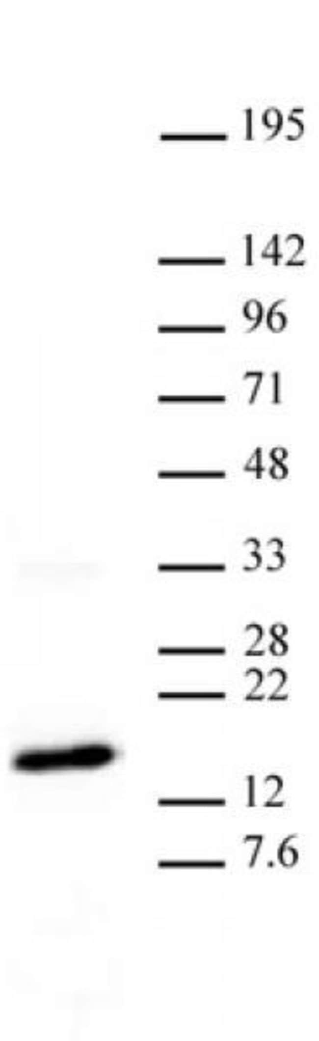 Histone H3K27me3 Mouse anti-Human, Mouse, Clone: MABI 0323, Active Motif:Antibodies:Primary