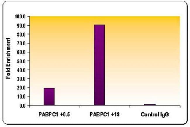 Histone H3K36me3 Rabbit anti-Human, Mouse, Unconjugated, Polyclonal, Active
