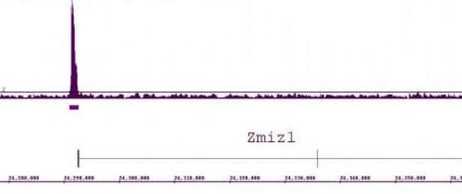 LXR-alpha Rabbit anti-Human, Mouse, Unconjugated, Polyclonal, Active Motif:Antibodies:Primary