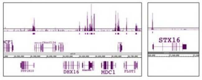 EED Mouse anti-Human, Clone: 41D, Active Motif:Antibodies:Primary Antibodies