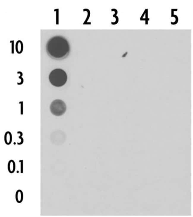 5-Carboxylcytosine (5-caC) Rabbit anti-Chemical, Unconjugated, Polyclonal,
