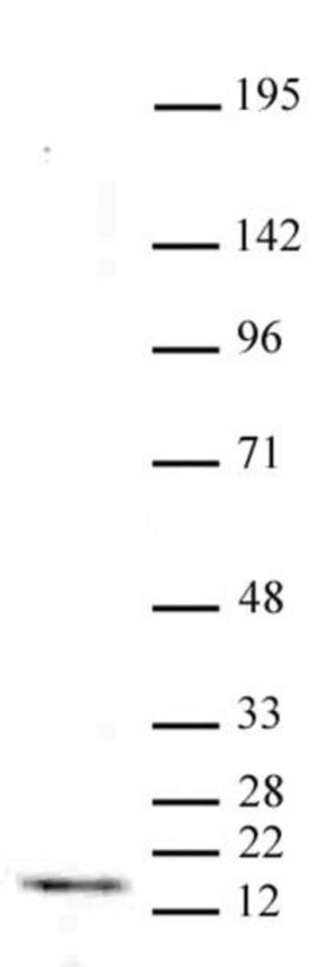 Histone H3K4me3 Mouse anti-Human, Clone: MABI 0304, Active Motif:Antibodies:Primary