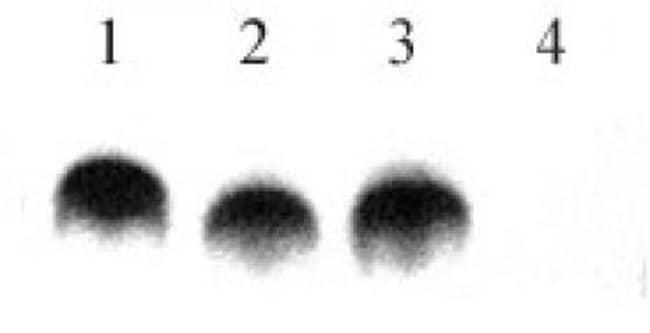 Histone H4K8K12K16 (pan-biotinylated) Rabbit anti-Human, Biotin, Polyclonal,