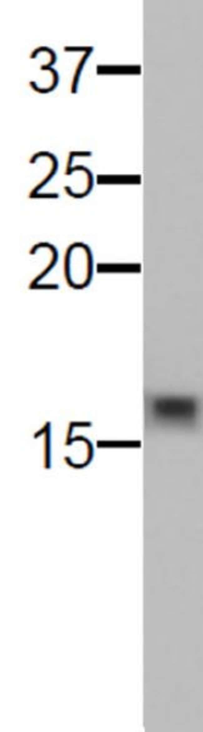 Histone H3K9me0 Mouse anti-Human, Clone: 9B1-2G6, Active Motif:Antibodies:Primary
