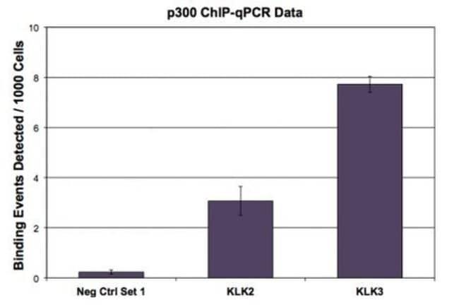 p300 Mouse anti-Human, Clone: NM11, Active Motif:Antibodies:Primary Antibodies