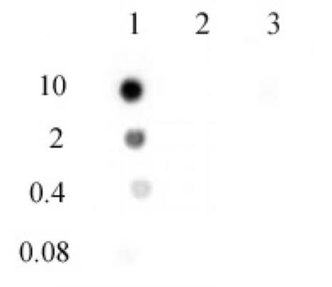 N6-Methyladenosine (m6A) Rabbit anti-Human, Many, Mouse, Rat, Unconjugated,