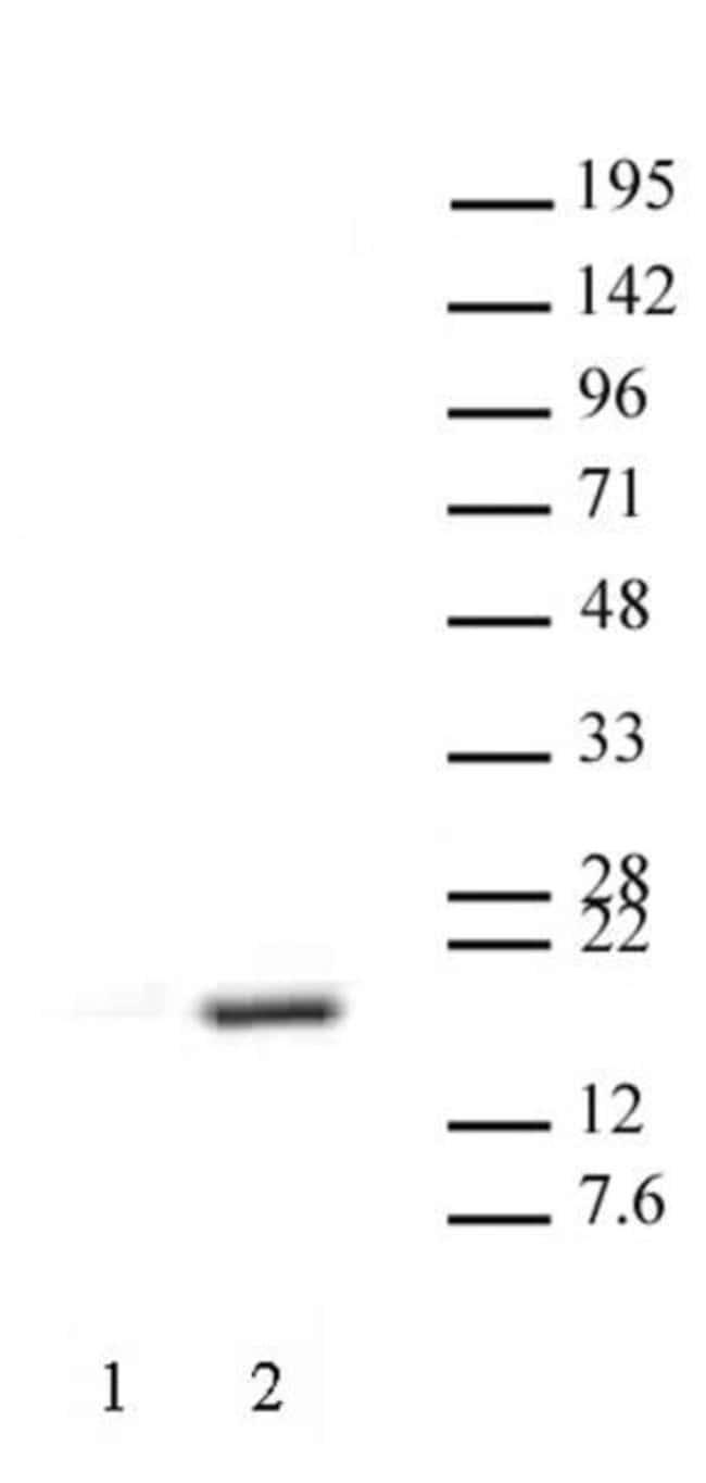Histone H3R17me2aK18ac Rabbit anti-Human, Mouse, Unconjugated, Polyclonal,