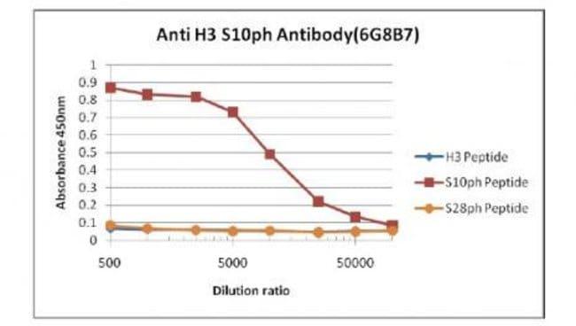 Histone H3S10ph Rat anti-Human, Clone: 6G8B7, Active Motif:Antibodies:Primary