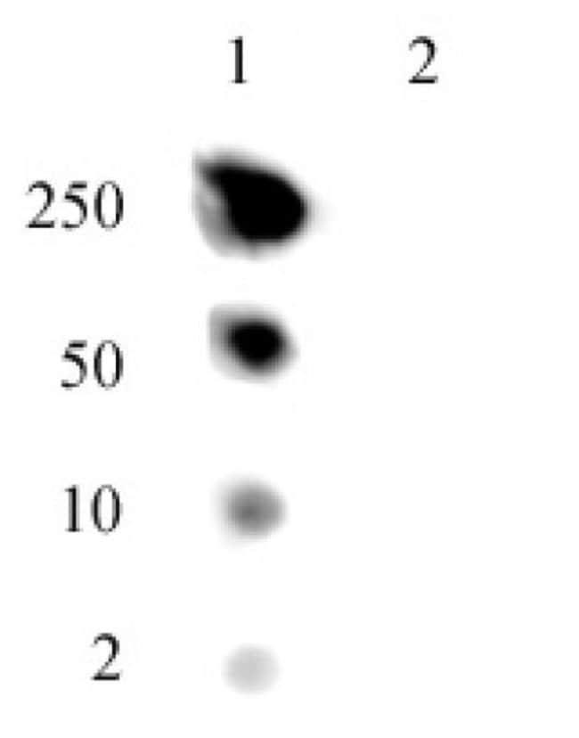 Histone H2A.J Rabbit anti-Human, Mouse, Unconjugated, Polyclonal, Active