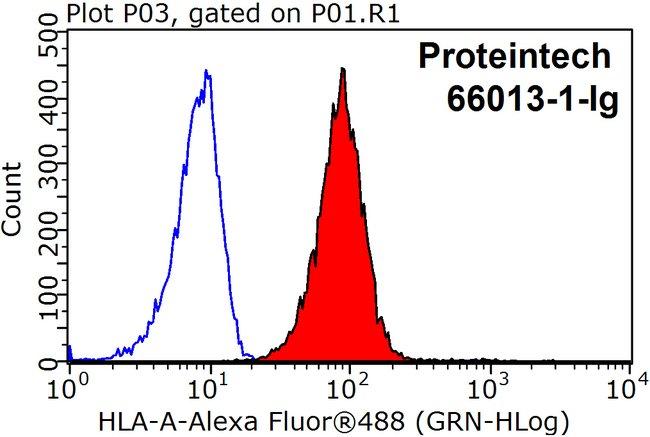 HLA class I ABC Mouse anti-Human, Porcine, Clone: 5C5B7, Proteintech 150 μL; Unconjugated Produkte