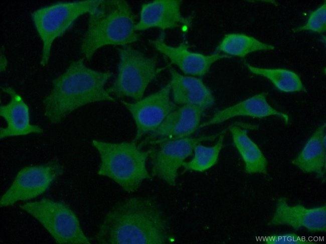 EIF3D Mouse anti-Human, Mouse, Rat, Clone: 2C5A3, Proteintech 150 μL; Unconjugated Produkte