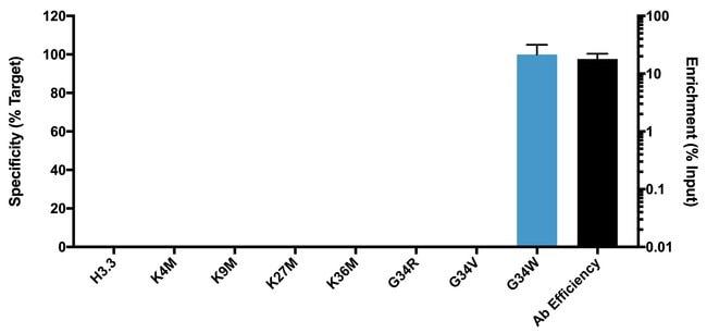 H3.3 G34W Rabbit anti-Human, Clone: 4H32L4, Invitrogen:Antibodies:Primary