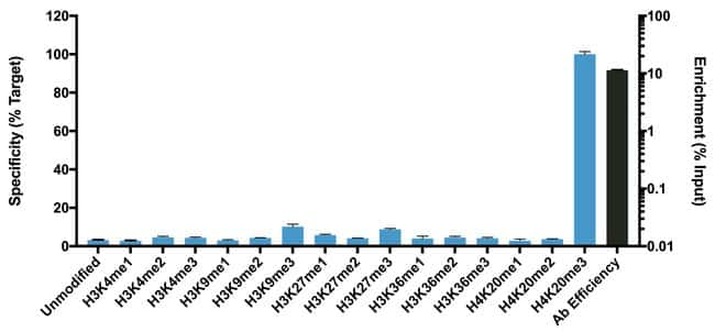 H4K20me3 Rabbit anti-Human, Polyclonal, Invitrogen:Antibodies:Primary Antibodies