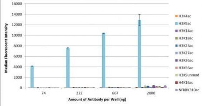 Histone H3K9ac Mouse anti-Human, Active Motif:Antibodies:Primary Antibodies