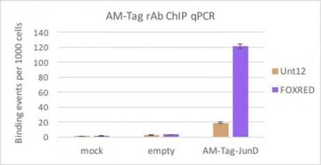 AM-Tag Mouse anti-Human, Active Motif:Antibodies:Primary Antibodies