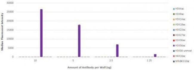 Histone H3K56ac Mouse anti-Human, Active Motif:Antibodies:Primary Antibodies