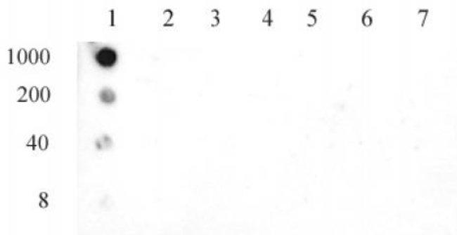 Histone H3S10ph Mouse anti-Human, Active Motif:Antibodies:Primary Antibodies