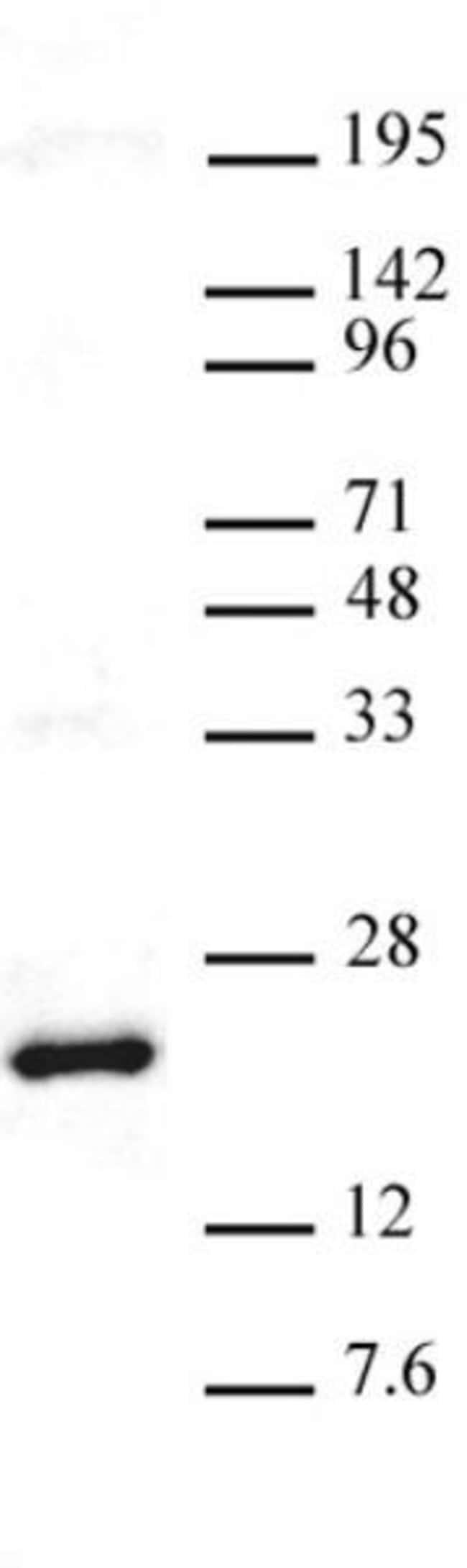 Histone H3K27me3 Rabbit anti-Human, Active Motif:Antibodies:Primary Antibodies