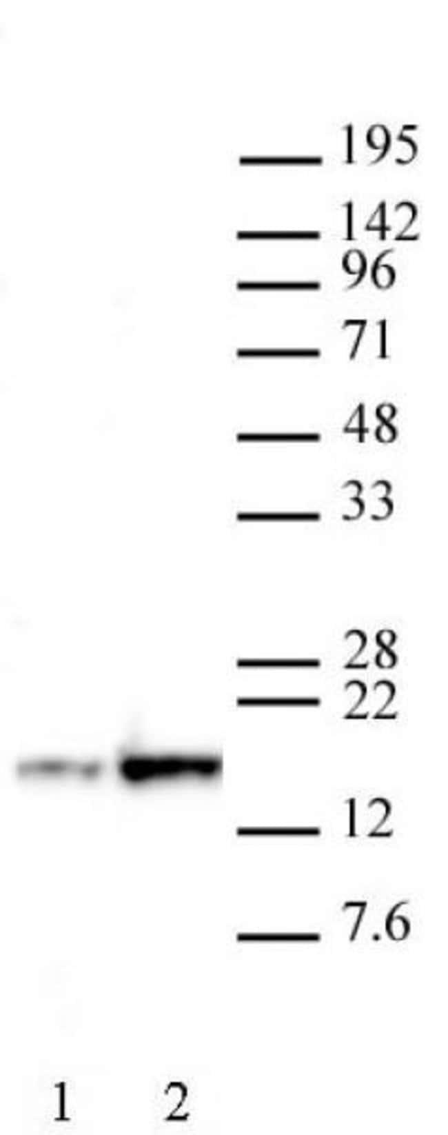 Histone H3K27ac Mouse anti-Human, Active Motif:Antibodies:Primary Antibodies