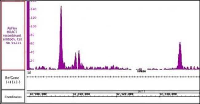 HDAC1 Mouse anti-Human, Mouse, Active Motif:Antibodies:Primary Antibodies