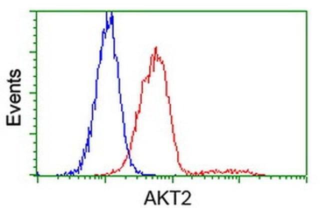 AKT2 Mouse anti-Human, Clone: OTI8D9, liquid, TrueMAB  100 µL; Unconjugated