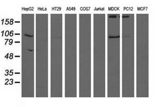 ALDH1L1 Mouse anti-Human, Clone: OTI4C11, liquid, TrueMAB  100 µL;