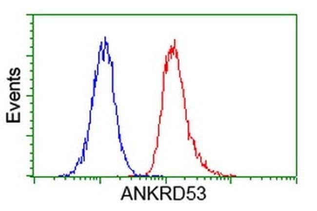 ANKRD53 Mouse anti-Human, Clone: OTI2F3, liquid, TrueMAB  100 µL;