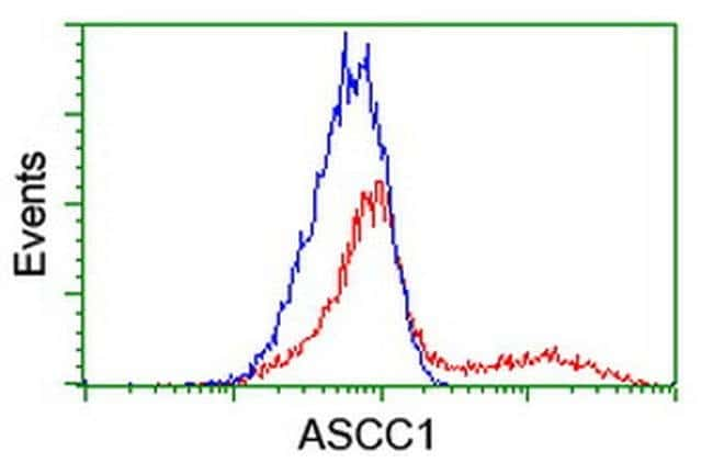 ASCC1 Mouse anti-Human, Clone: OTI2D7, liquid, TrueMAB  100 µL; Unconjugated