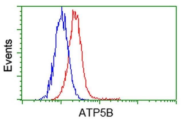 ATP5B Mouse anti-Human, Clone: OTI9E3, liquid, TrueMAB  100 µL; Unconjugated
