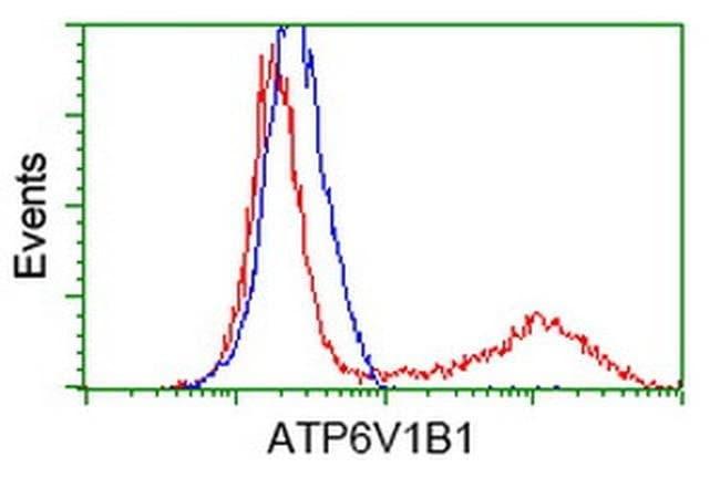 ATP6V1B1 Mouse anti-Human, Clone: OTI1H6, liquid, TrueMAB  100 µL;