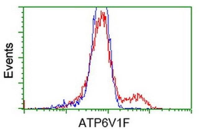 ATP6V1F Mouse anti-Human, Clone: OTI1B8, liquid, TrueMAB  100 µL;