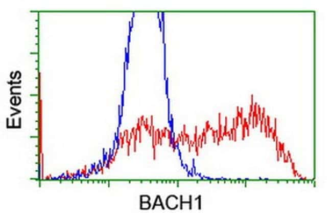 BACH1 Mouse anti-Human, Clone: OTI4E11, liquid, TrueMAB  100 µL; Unconjugated