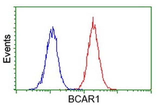BCAR1 Mouse anti-Canine, Human, Rat, Clone: OTI1B1, liquid, TrueMAB  100