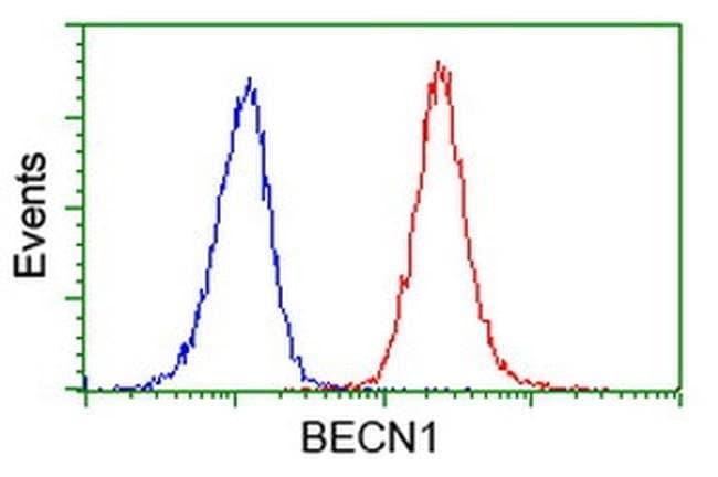 BECN1 Mouse anti-Human, Clone: OTI2C5, liquid, TrueMAB  100 µL; Unconjugated