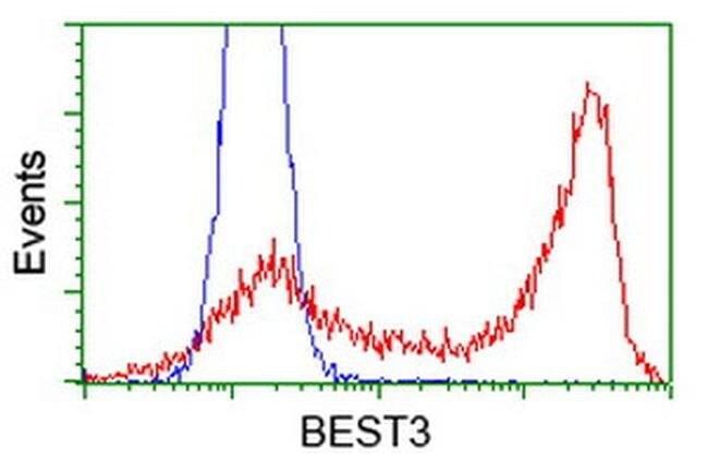 BEST3 Mouse anti-Human, Clone: OTI2H3, liquid, TrueMAB  100 µL; Unconjugated