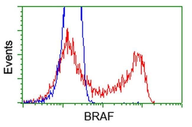 BRAF Mouse anti-Human, Clone: OTI1D4, liquid, TrueMAB  100 µL; Unconjugated