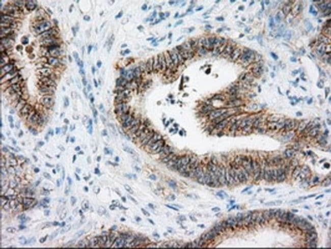 BSG Mouse anti-Human, Clone: OTI7A7, liquid, TrueMAB  100 µL; Unconjugated